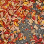 fall leaves on gravel
